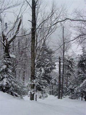 Chatiemac Tree Skiing