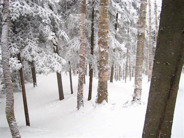 Pine Brook Glades