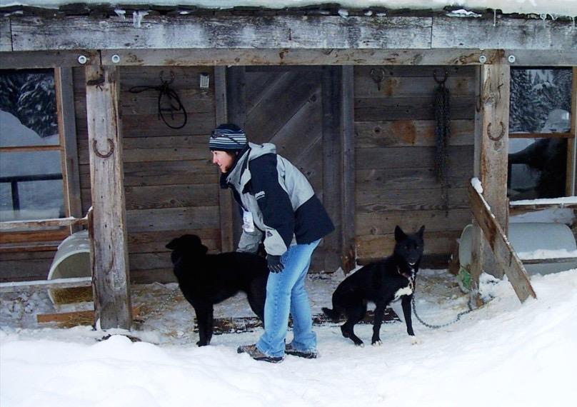 Grand Targhee sled dogs
