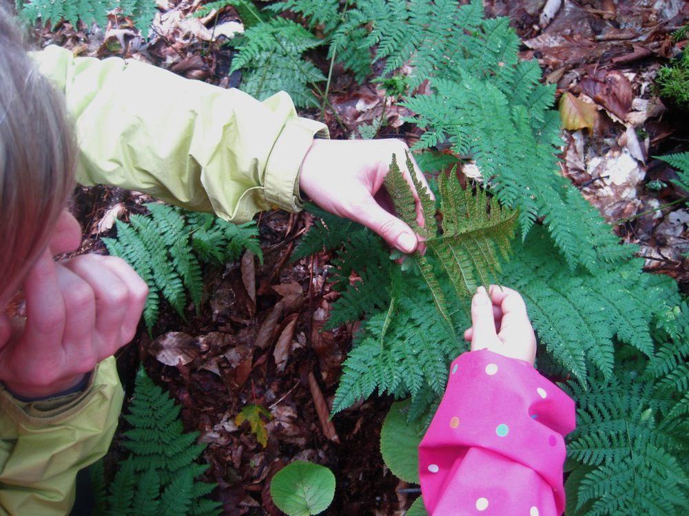 Zelda teaches Neve about fern spores