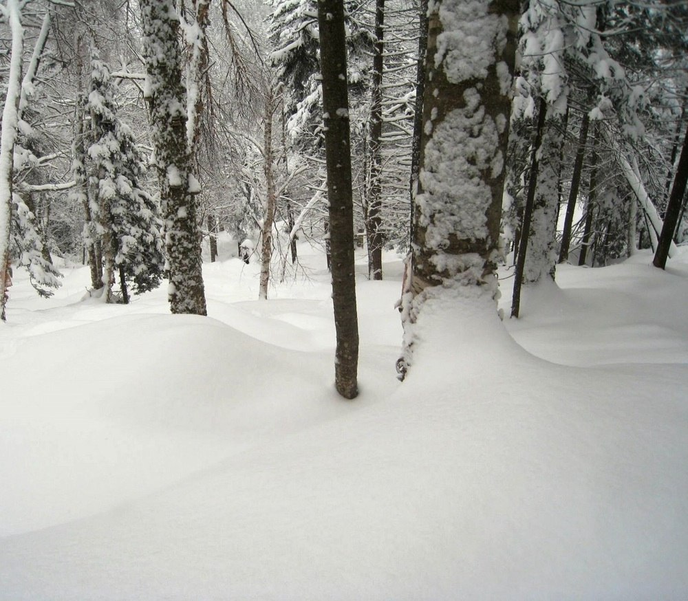 deep snow in Chatiemac Glade