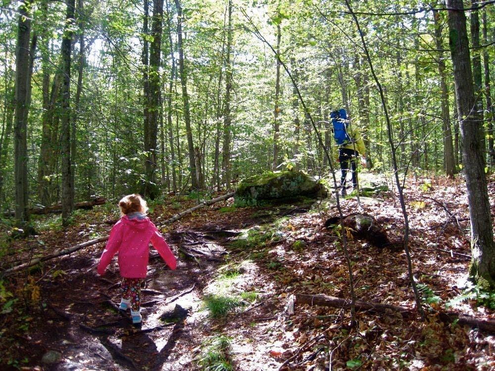 trail to Sawyer Mountain NY