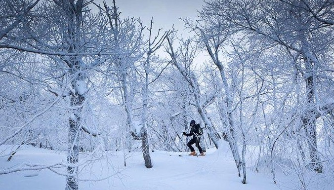 skiing the woods at Bearpen