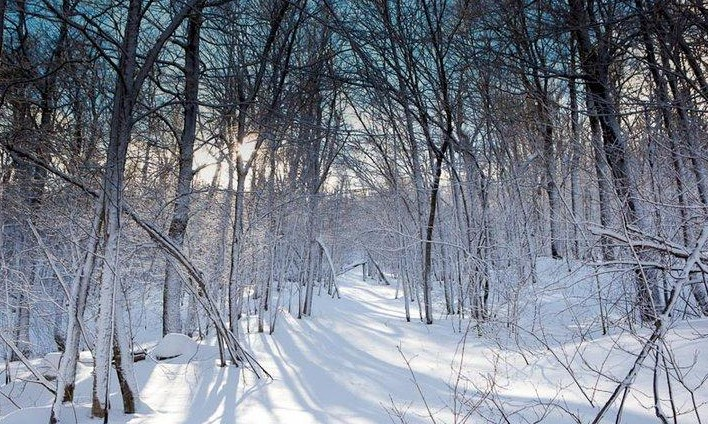 skiing Bearpen