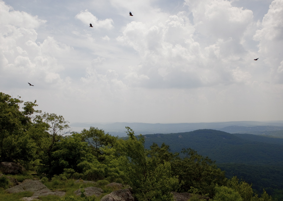 Vultures circling at Harriman State Park