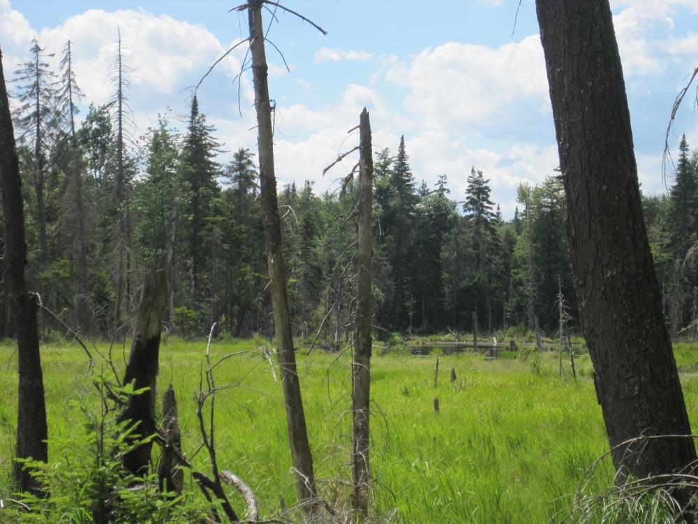 The Beaver Swamp