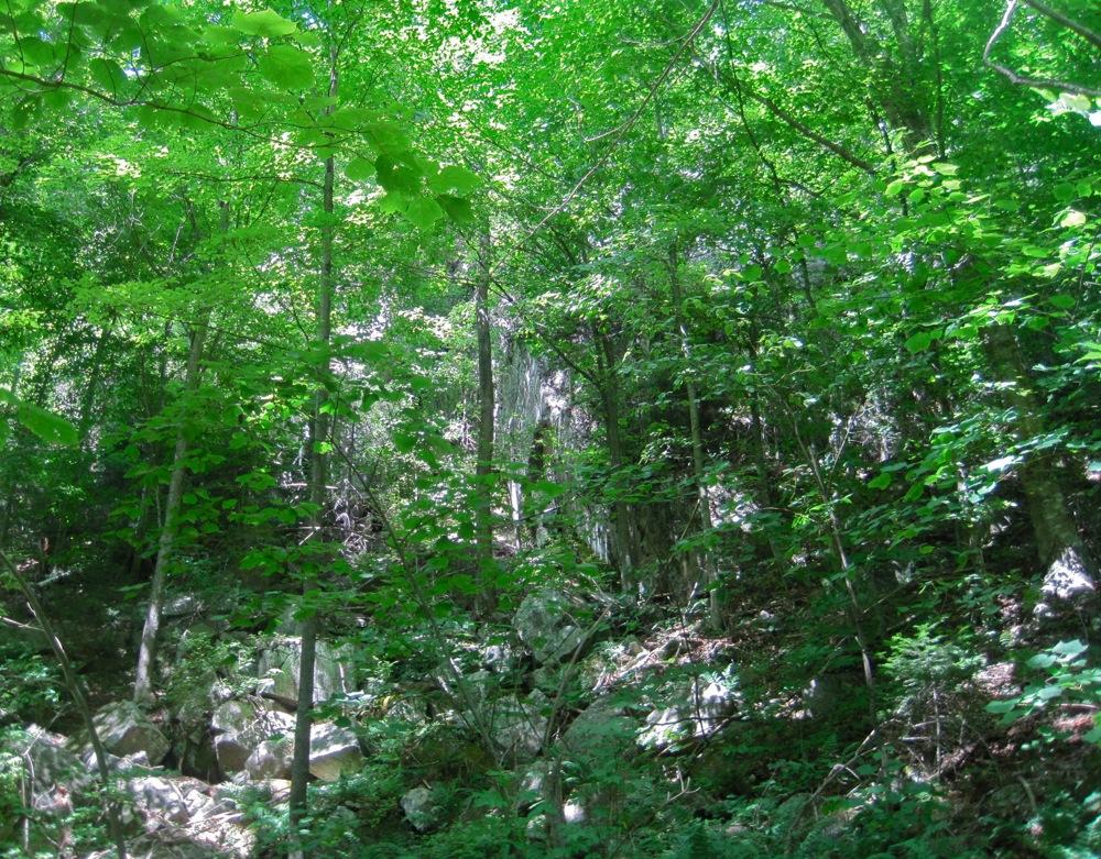 Cliffs along the Halfway Brook Trail.