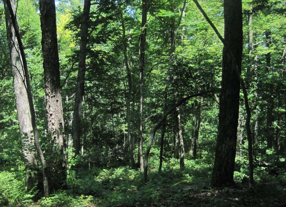 Glades on Raymond Brook Trail.