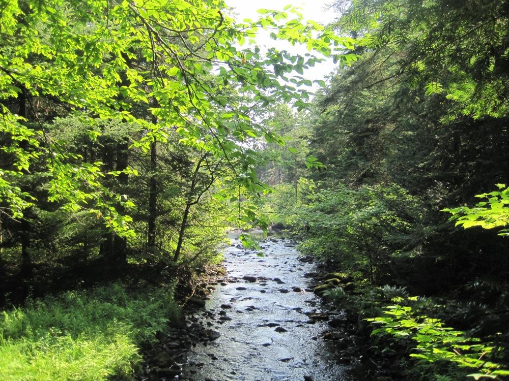 Botheration Brook