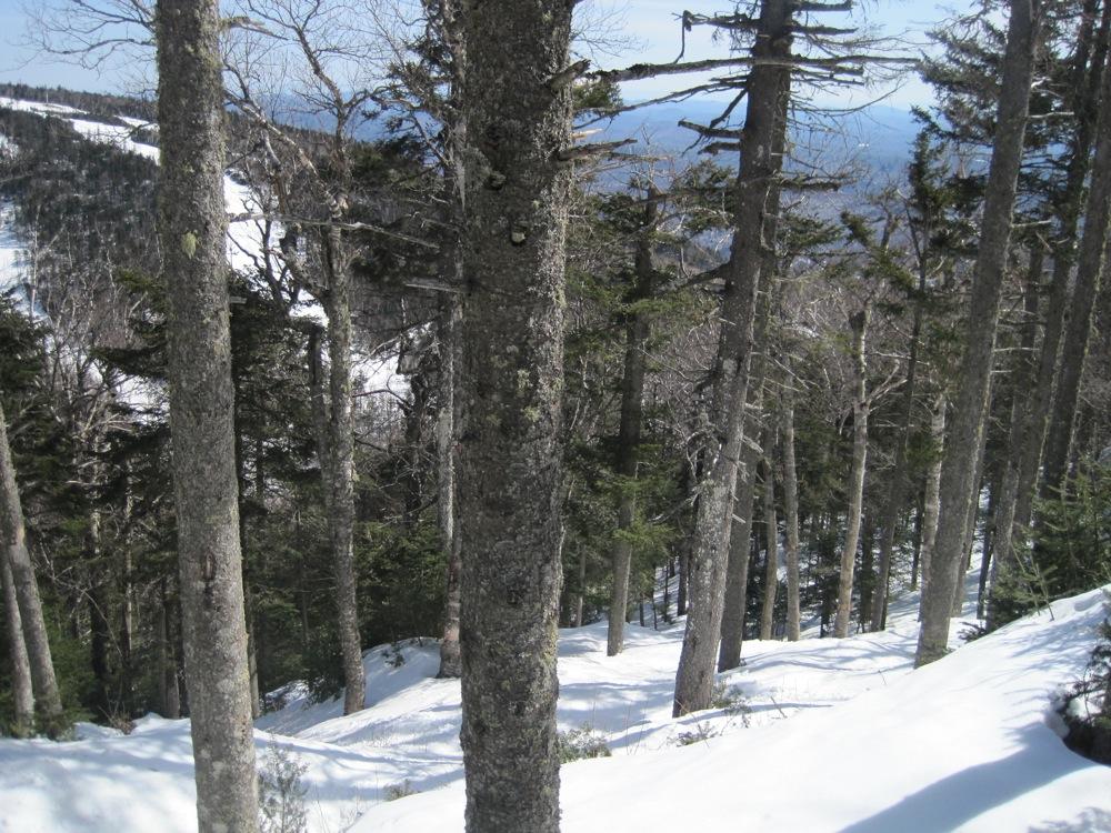 Gore Trees