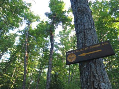 Balm-of-Gilead-Mountain-Sign