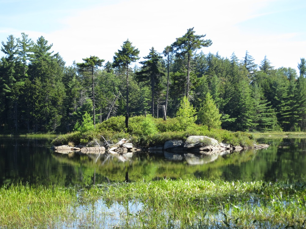 Island in Ross Pond