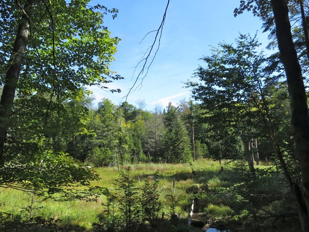 Swamp along Ross Pond Trail