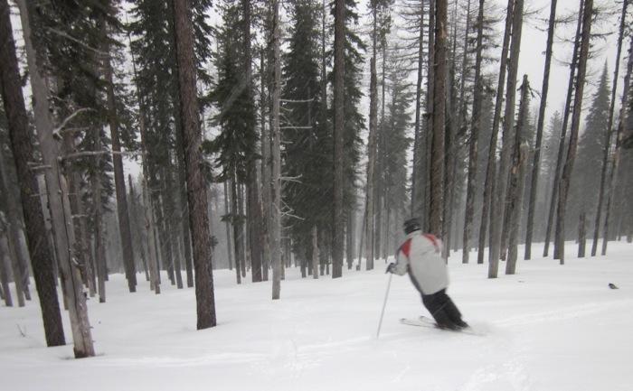 mt-spokane-trees