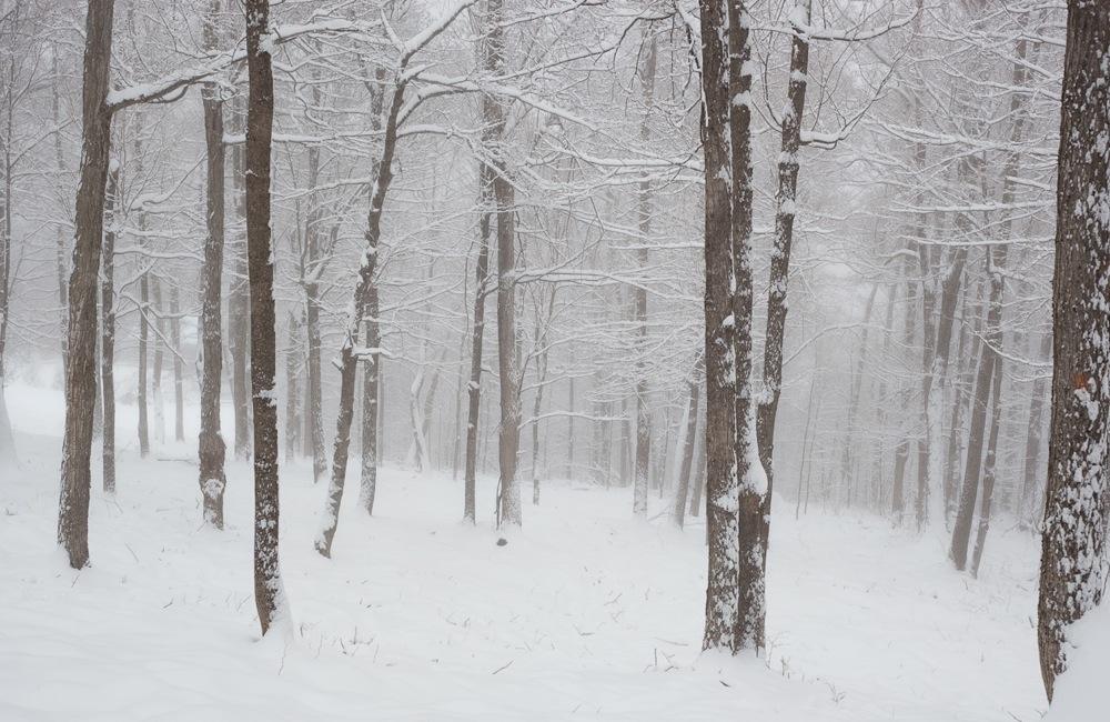 Windfall-Woods