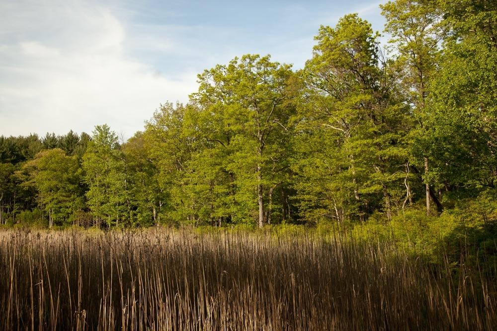 Grassy-Meadow