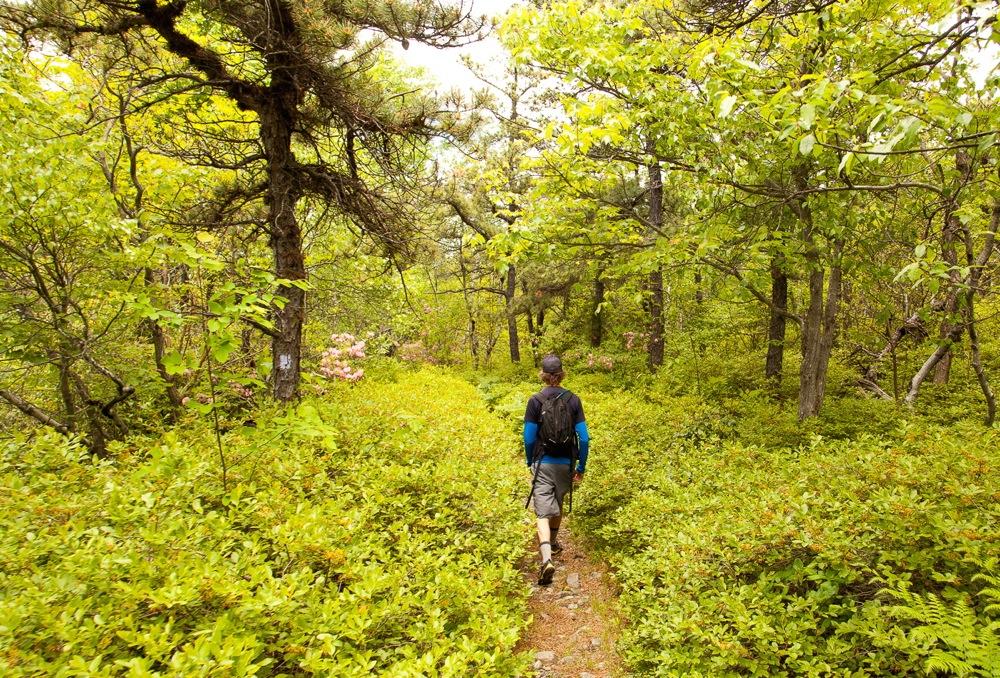 Minnewaska-State-Park-hiking-trail
