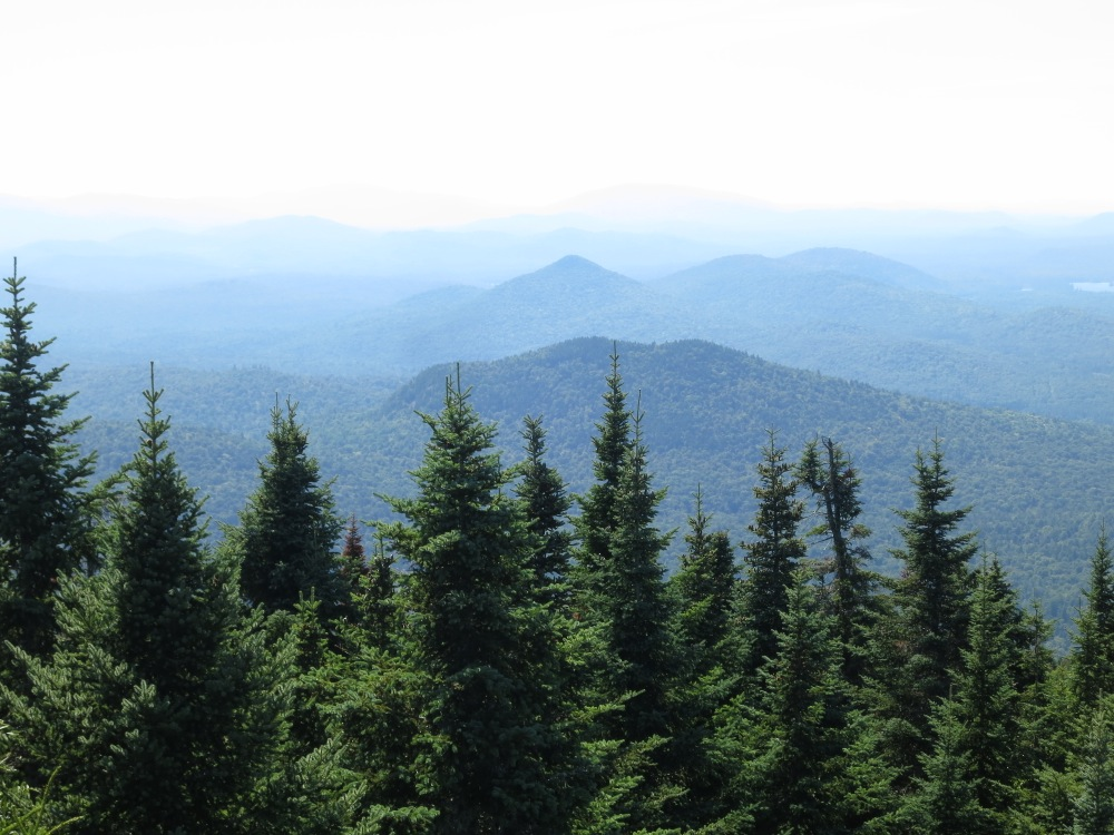 Trees-from-fire tower
