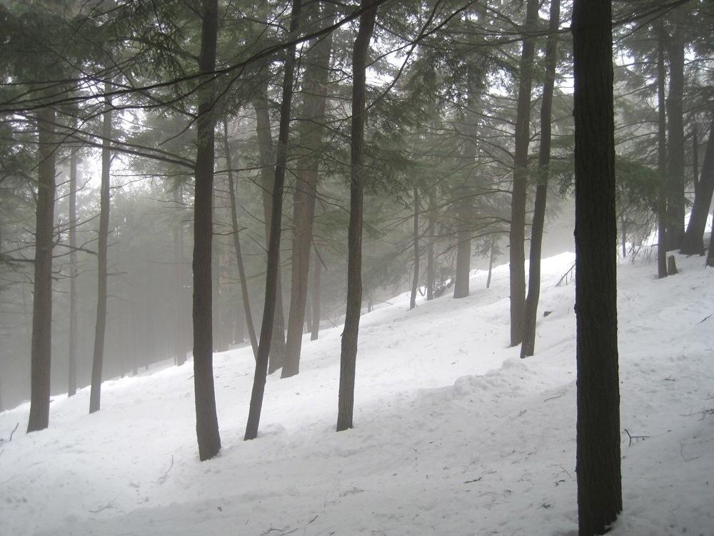 Pauls-Peril-Trees
