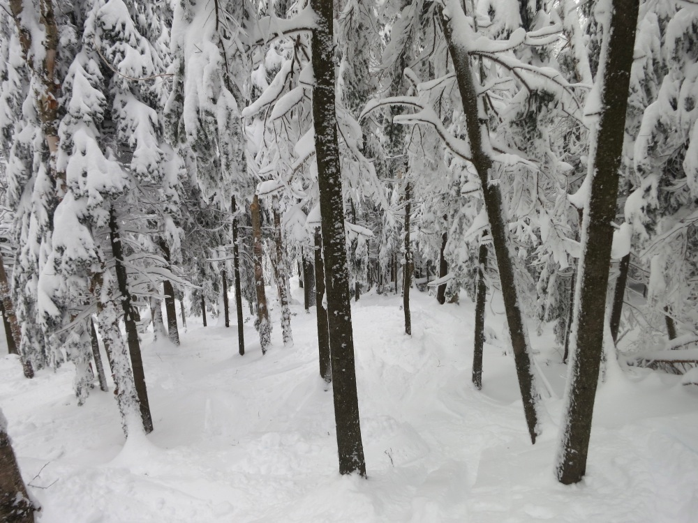 Pine-Brook-Glade