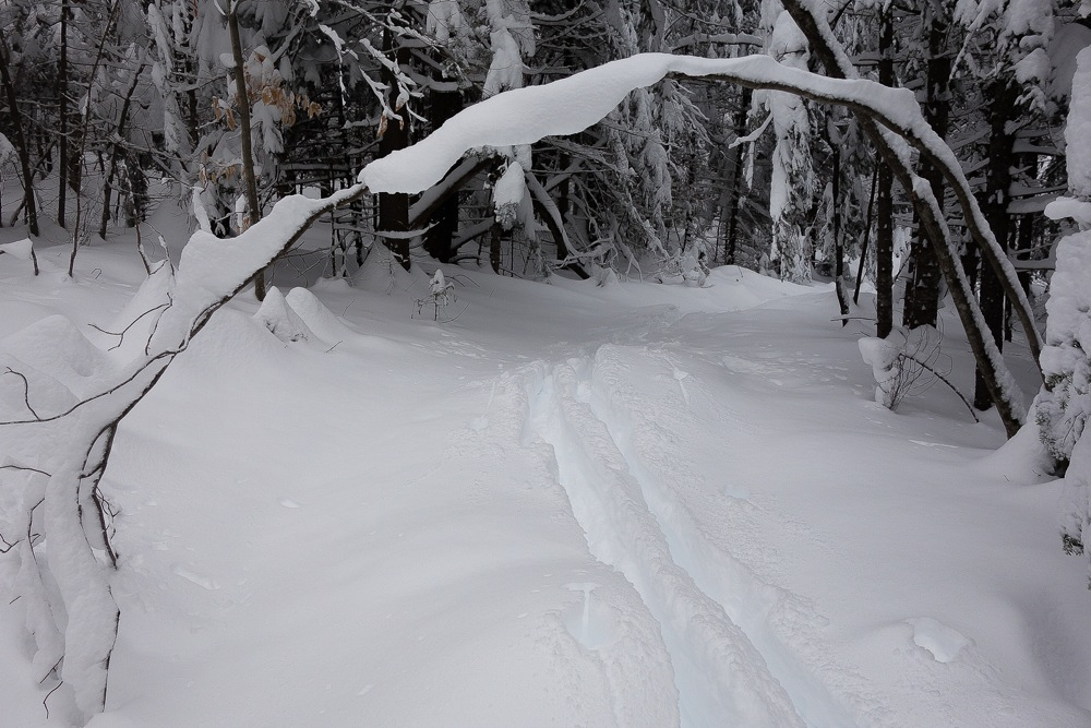 Wright-Peak-Trail