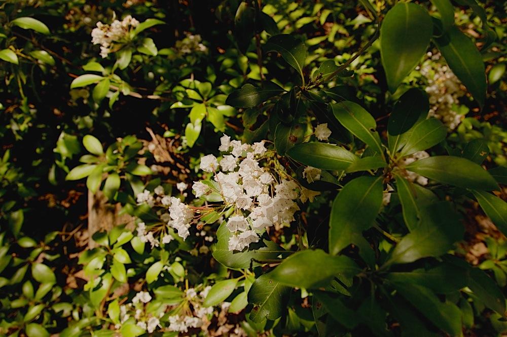 Wawayanda-Flowers