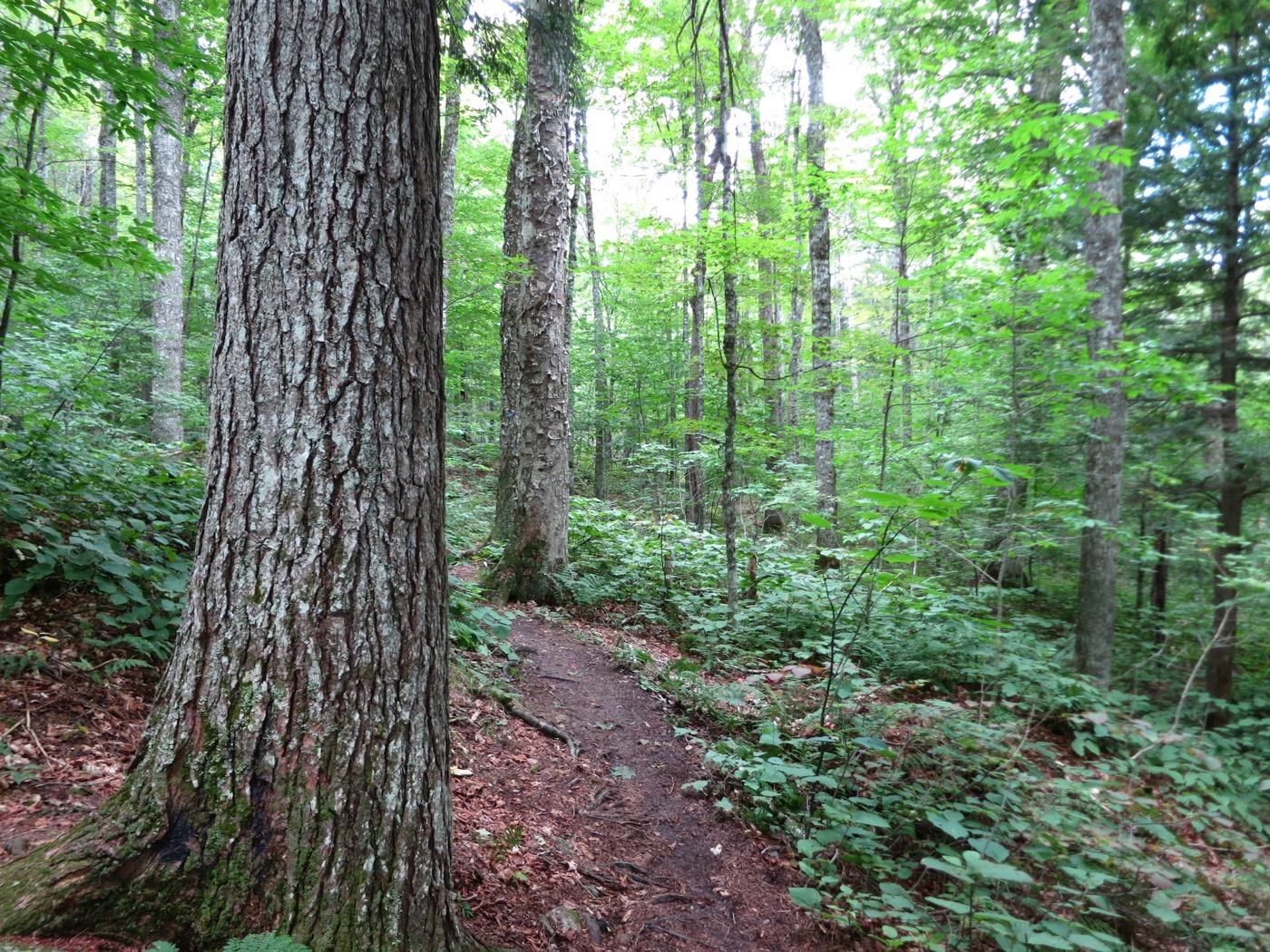 Massive-trees