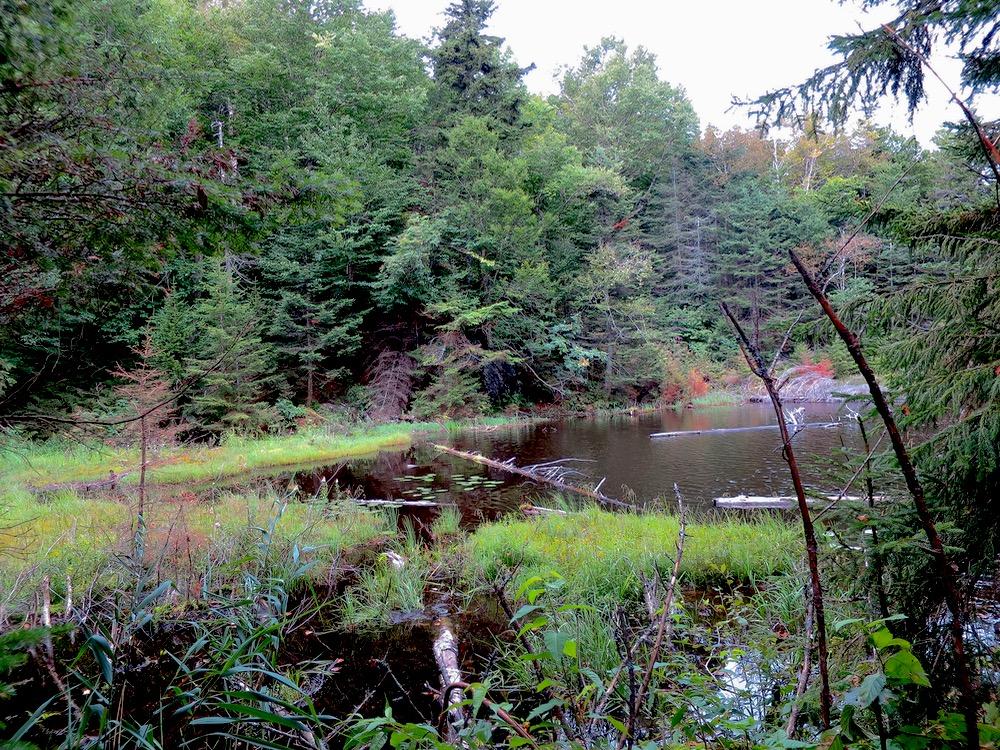 Sutton-swamp