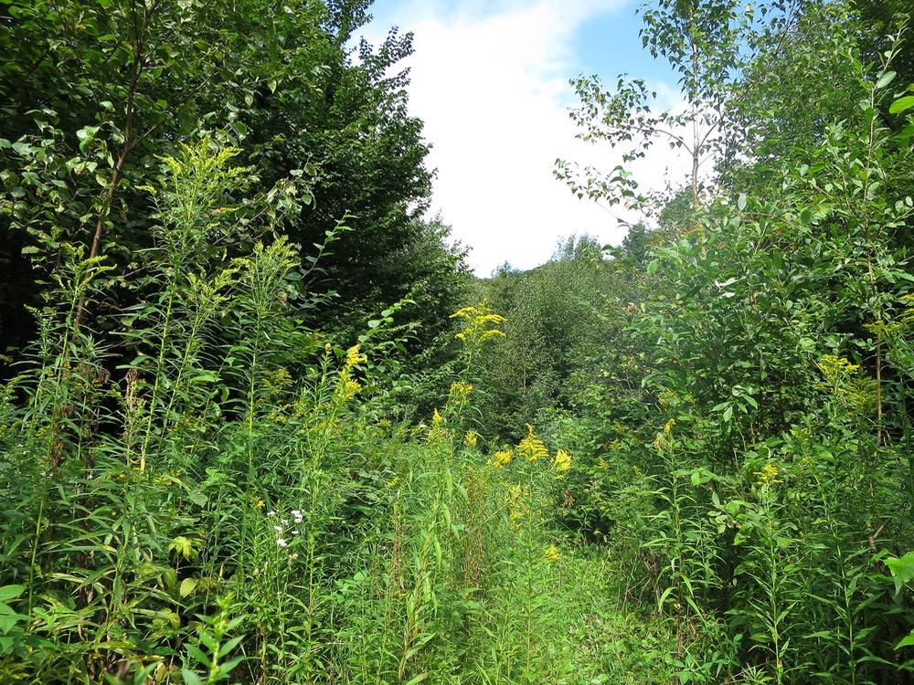 Sutton-trail