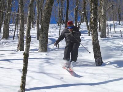 tree-skiing-plattekill