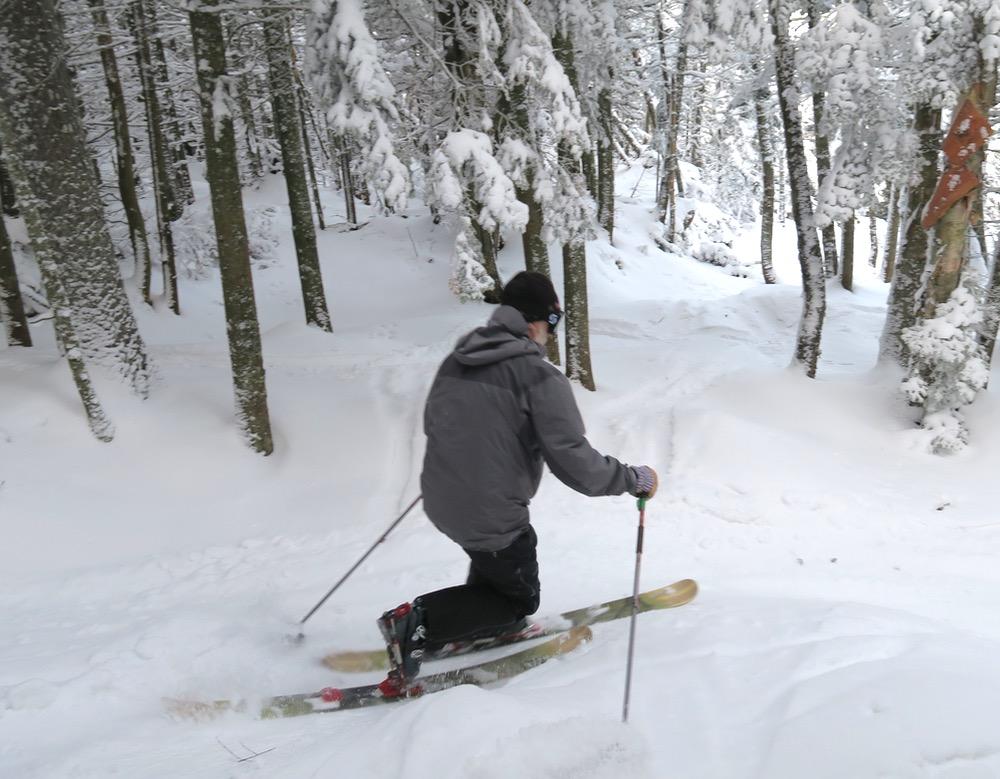 tree-skier