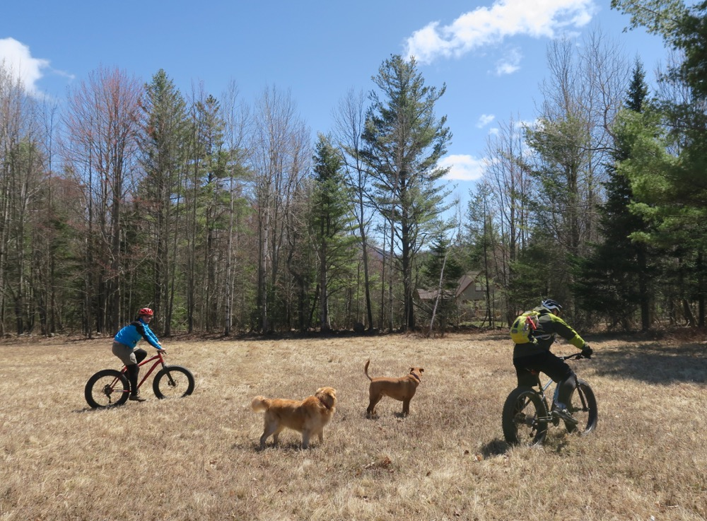 dogs-and-bikes