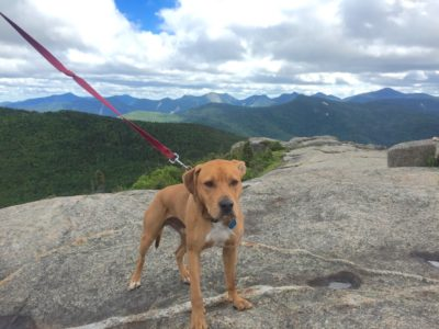 high-peaks-dog