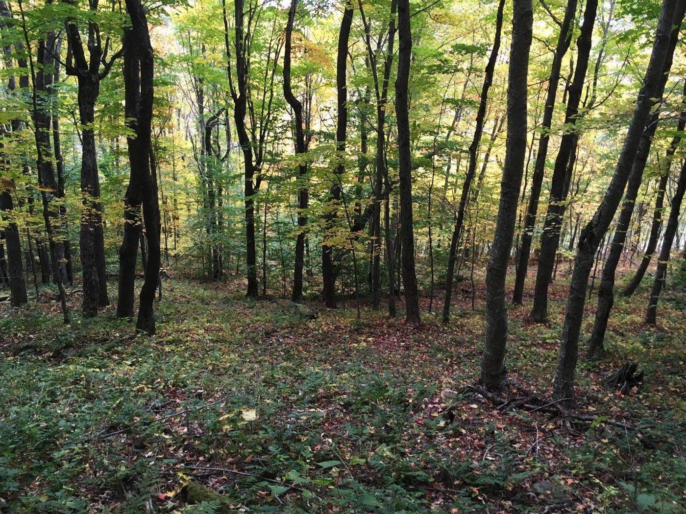 plattekill-trees