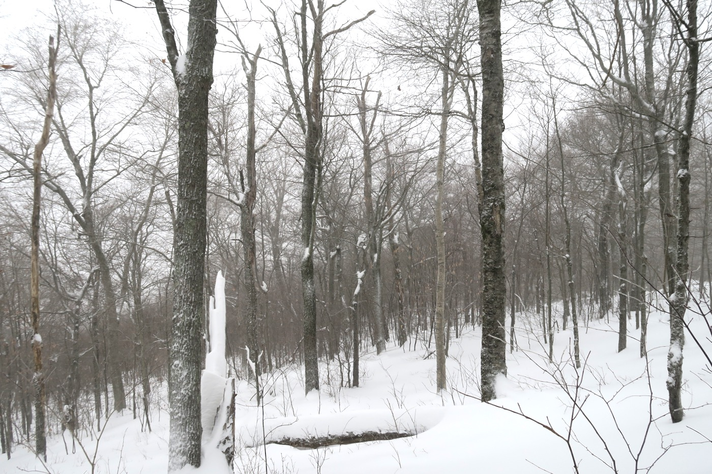 trees in play on opening day