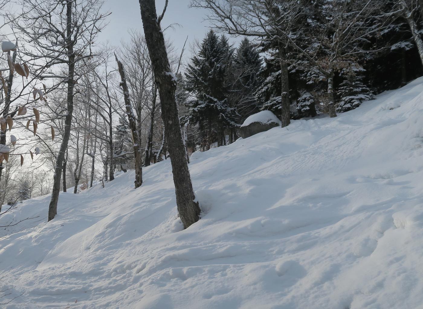 McCauley terrain