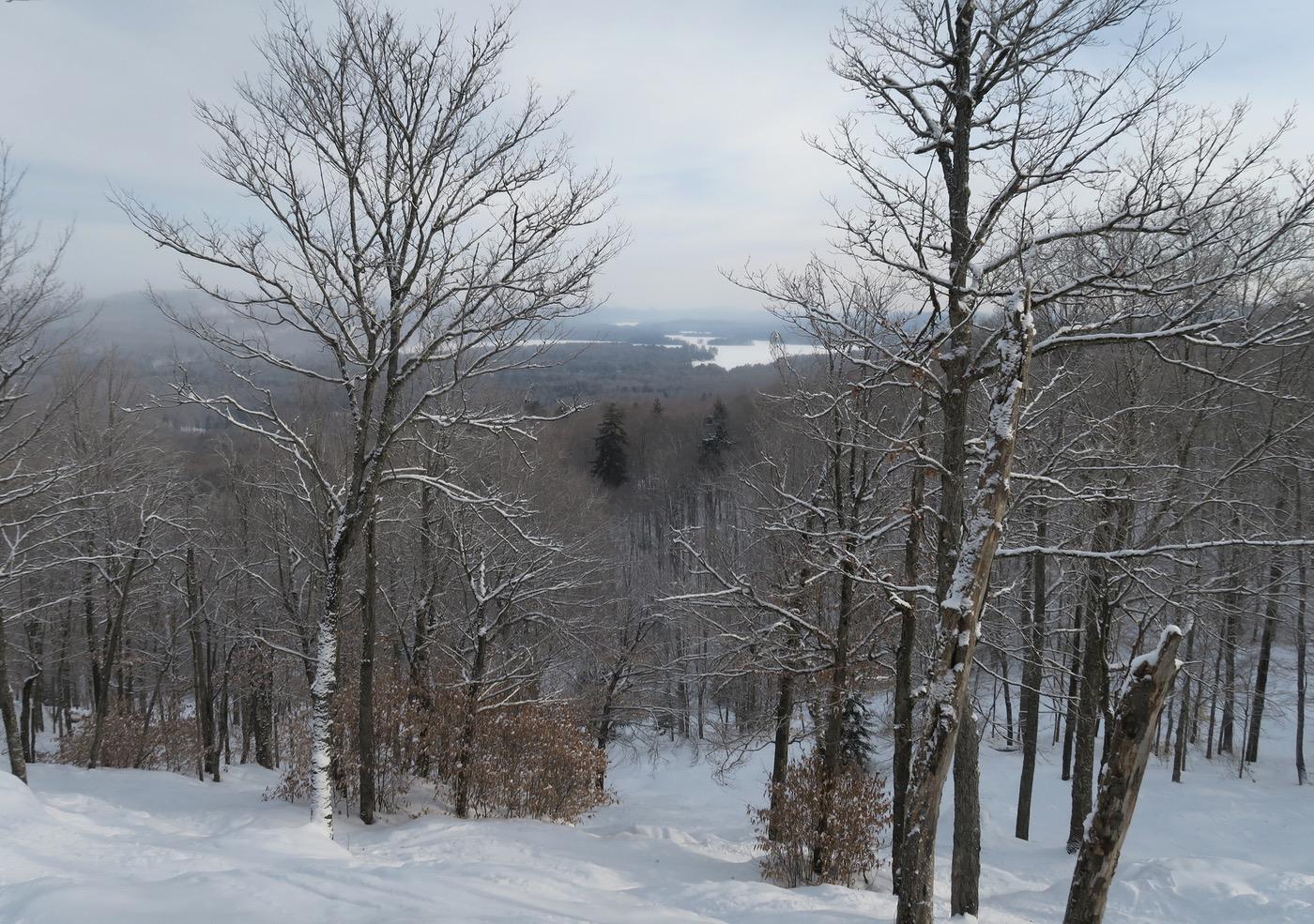 McCauley view