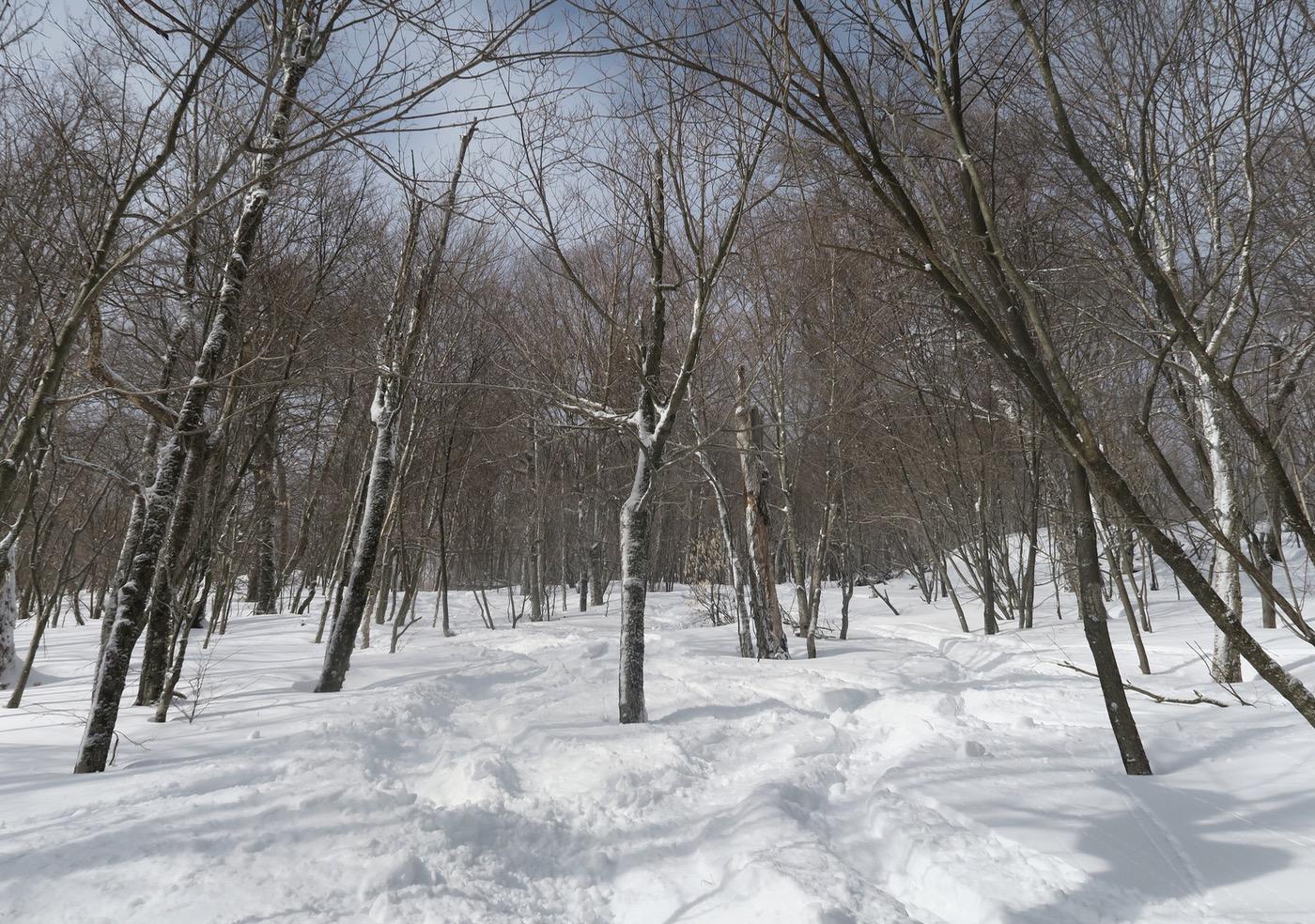 Plattekill trees