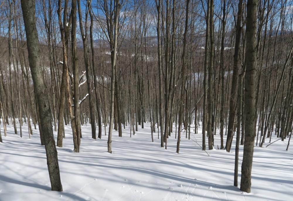 free tree lines