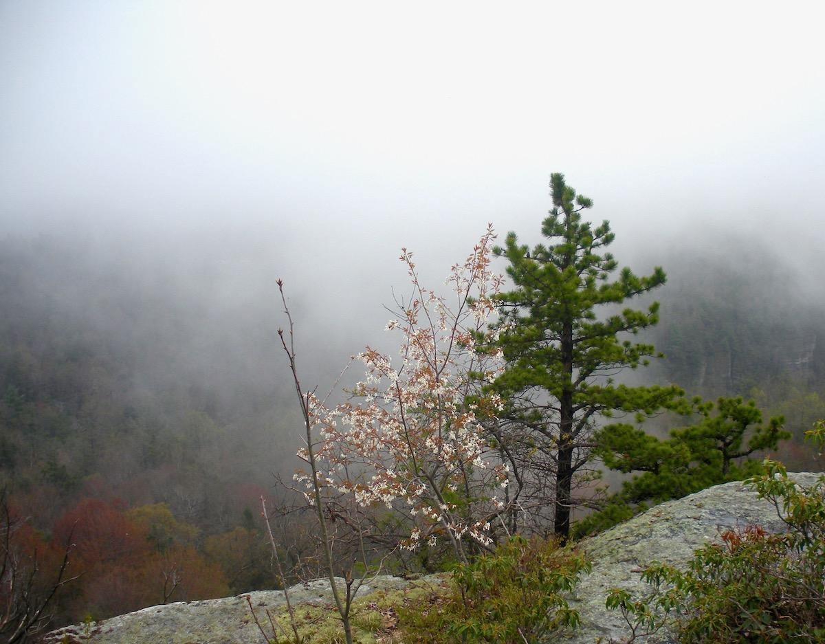 Shawangunk trail cliff