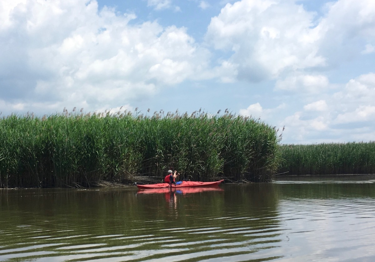 Piermont Marsh kayaking