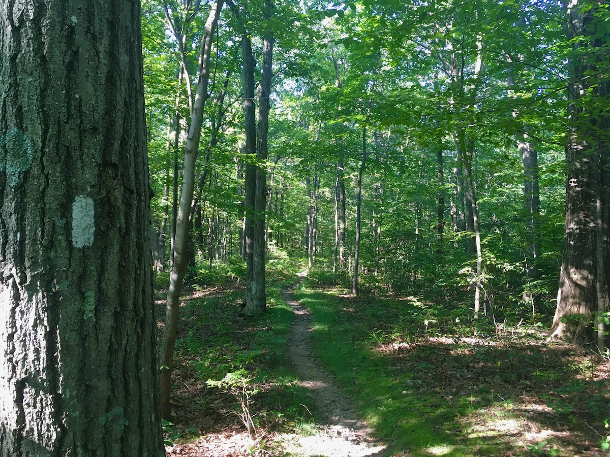 High Point State Park trail