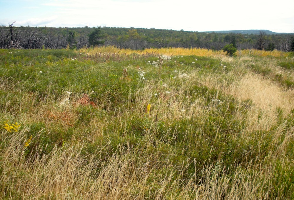 Minnewaska meadow