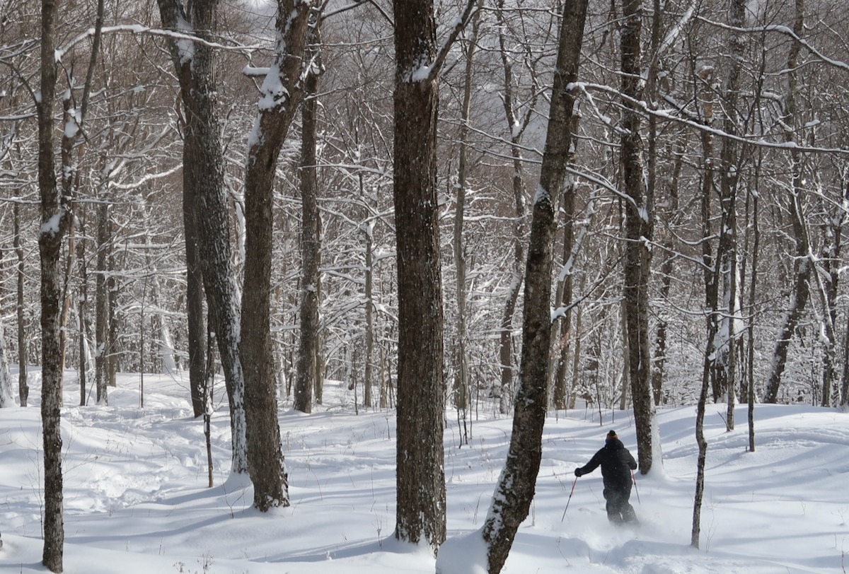 tree skier without a helmet
