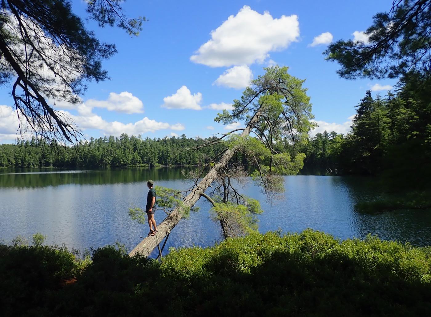 campsite tree