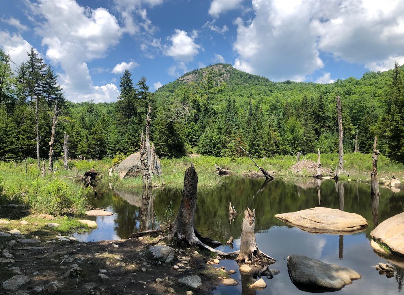 Peaked Mountain bog